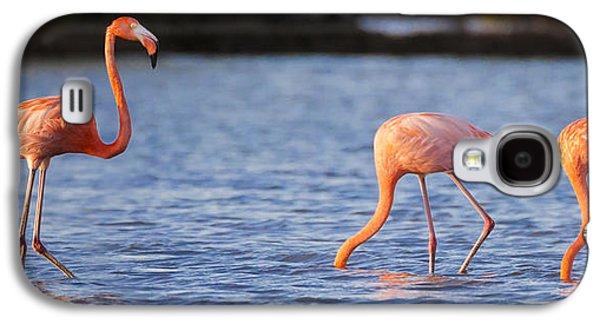 The Three Flamingos Galaxy S4 Case by Adam Romanowicz