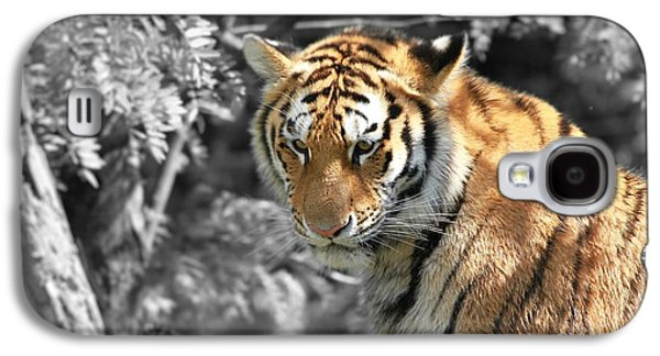 The Tiger Hunt Galaxy S4 Cases - The Tiger Galaxy S4 Case by Dan Sproul