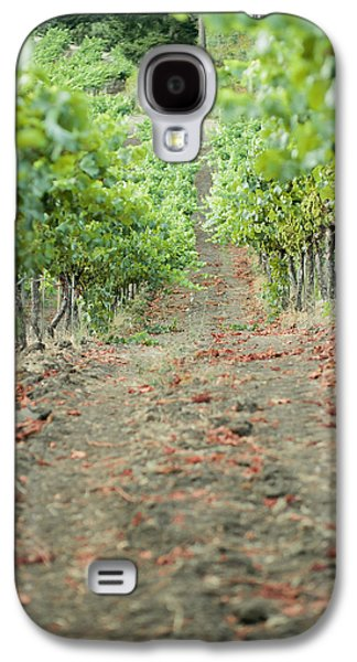 Sonoma County Vineyards. Galaxy S4 Cases - The Vines Galaxy S4 Case by Ariane Moshayedi