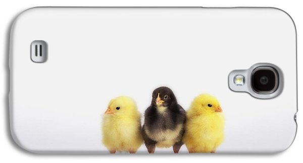 Three Chicks Galaxy S4 Cases - Three Baby Chicks In A Rowbritish Galaxy S4 Case by Thomas Kitchin & Victoria Hurst