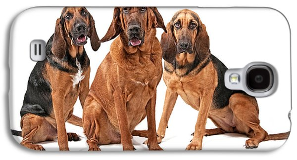 Guard Dog Galaxy S4 Cases - Three Bloodhound Dogs Isolated on White Galaxy S4 Case by Susan  Schmitz
