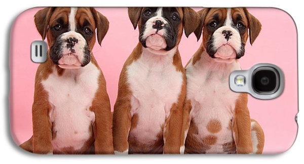 Boxer Puppy Galaxy S4 Cases - Three Boxer Puppies Galaxy S4 Case by Mark Taylor