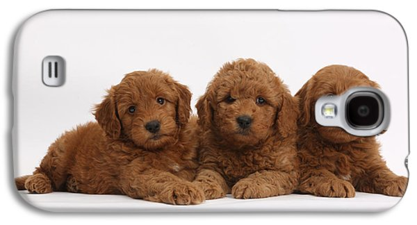 House Pet Galaxy S4 Cases - Three Cute Red F1b Goldendoodle Puppies Galaxy S4 Case by Mark Taylor
