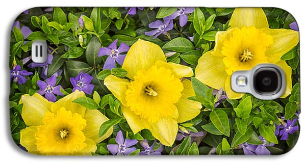 Interior Still Life Photographs Galaxy S4 Cases - Three Daffodils in Blooming Periwinkle Galaxy S4 Case by Adam Romanowicz