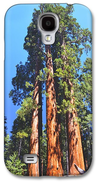 Tree Roots Galaxy S4 Cases - Three Giant Sequoias  Galaxy S4 Case by Barbara Snyder