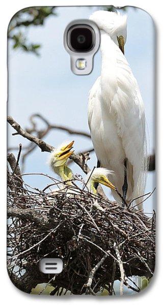 Three Chicks Galaxy S4 Cases - Three Great Egret Chicks in Nest Galaxy S4 Case by Carol Groenen