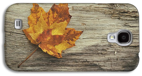 Three Leaves Galaxy S4 Case by Scott Norris