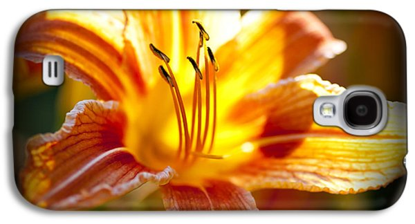 Square Format Galaxy S4 Cases - Tiger lily flower Galaxy S4 Case by Elena Elisseeva