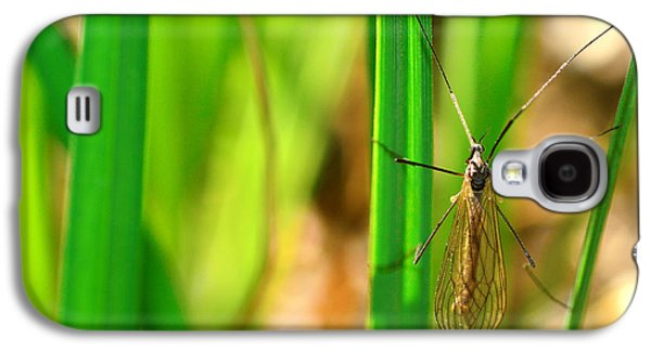 Invertebrates Mixed Media Galaxy S4 Cases - Tipula Galaxy S4 Case by Toppart Sweden
