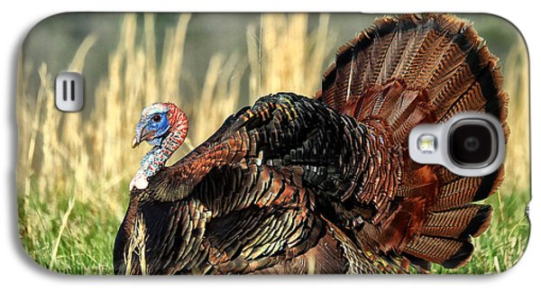 Wild Turkey Galaxy S4 Cases - Tom Turkey Galaxy S4 Case by Jaki Miller