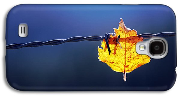 Fence Galaxy S4 Cases - Trapped Leaf On Barbed Wire Galaxy S4 Case by Mikel Martinez de Osaba