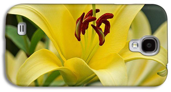 Indiana Flowers Galaxy S4 Cases - Trebbiano Lily Galaxy S4 Case by Sandy Keeton