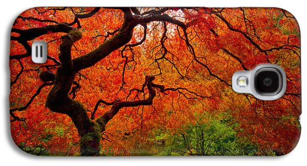 Autumn Landscape Photographs Galaxy S4 Cases - Tree Fire Galaxy S4 Case by Darren  White