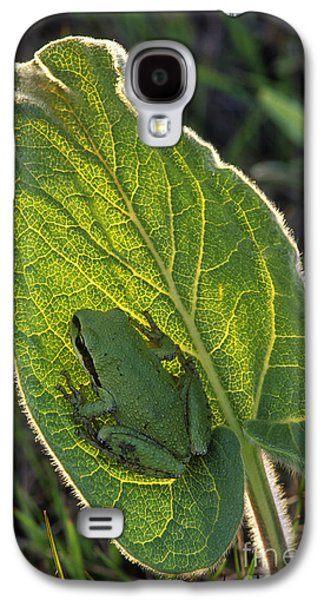 Spring Peepers Galaxy S4 Cases - Tree Frog on Balsamroot Leaf Galaxy S4 Case by Michael Wheatley