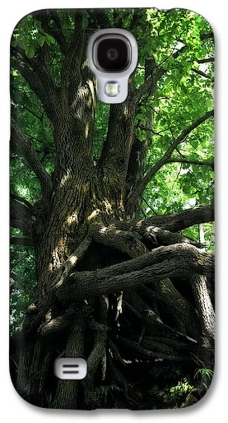 Tree On Pierce Stocking Scenic Drive Galaxy S4 Case by Michelle Calkins