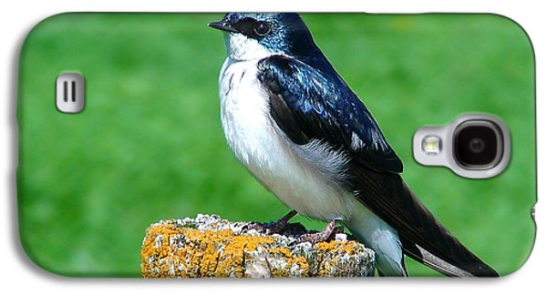Swallow Galaxy S4 Cases - Tree Swallow 3 Galaxy S4 Case by Thomas Young