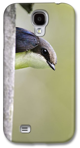 Tree Swallow Closeup Galaxy S4 Case by Christina Rollo