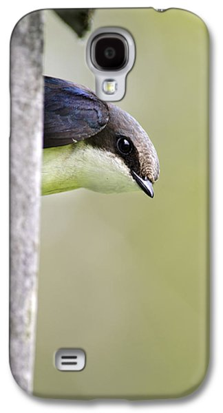 Swallow Galaxy S4 Cases - Tree Swallow Closeup Galaxy S4 Case by Christina Rollo