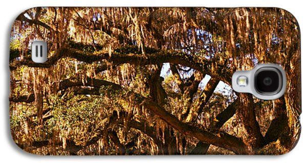 Garden Scene Galaxy S4 Cases - Trees Covered With Spanish Moss, Boone Galaxy S4 Case by Panoramic Images
