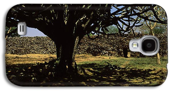 Ancient Galaxy S4 Cases - Trees In A Field With A Stone Wall Galaxy S4 Case by Panoramic Images
