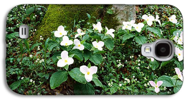 Gatlinburg Galaxy S4 Cases - Trillium Wildflowers On Plants, Chimney Galaxy S4 Case by Panoramic Images