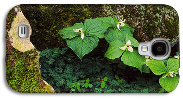 Gatlinburg Galaxy S4 Cases - Trillium Wildflowers On Plants, Great Galaxy S4 Case by Panoramic Images