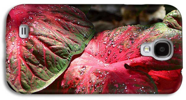 Rainy Day Photographs Galaxy S4 Cases - Tropical Rain - Botanical Art by Sharon Cummings Galaxy S4 Case by Sharon Cummings