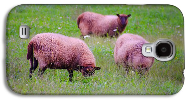 Sheep Digital Art Galaxy S4 Cases - Trouble Comes in Threes Galaxy S4 Case by Bill Cannon