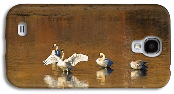 Swans... Galaxy S4 Cases - Trumpeter Ballet Galaxy S4 Case by Mike  Dawson