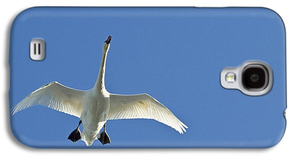 Harts Galaxy S4 Cases - Trumpeter Swan In Flight Galaxy S4 Case by Cathy Hart