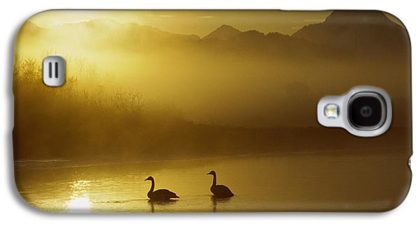 Swan Pair Galaxy S4 Cases - Trumpeter Swan Pair at Sunset Galaxy S4 Case by Michael Quinton