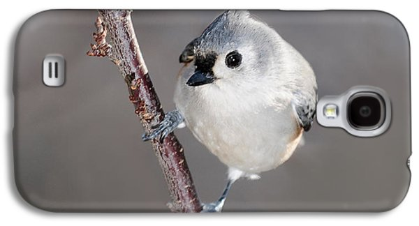 Tufted Titmouse Galaxy S4 Cases - Tufted Titmouse 3 Galaxy S4 Case by Lara Ellis