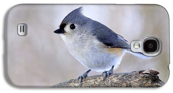 Tufted Titmouse Galaxy S4 Cases - Tufted Titmouse on Dogwood 2 Galaxy S4 Case by Thomas R Fletcher