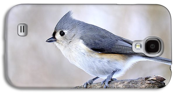 Tufted Titmouse Galaxy S4 Cases - Tufted Titmouse on Dogwood 3 Galaxy S4 Case by Thomas R Fletcher