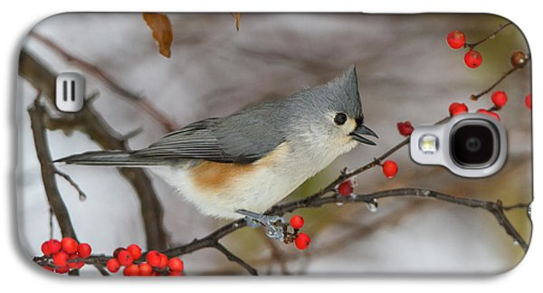 Tufted Titmouse (parus Bicolor Galaxy S4 Case by Richard and Susan Day