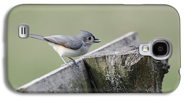 Tufted Titmouse Galaxy S4 Cases - Tufted Titmouse with Seed Galaxy S4 Case by Heather Applegate