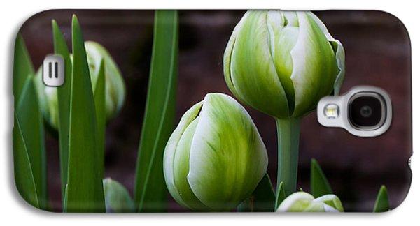Cheekwood Galaxy S4 Cases - Tulip Buds Galaxy S4 Case by Paula Ponath