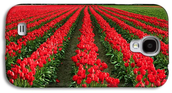 Agronomy Galaxy S4 Cases - Tulip Cornucopia Galaxy S4 Case by Inge Johnsson