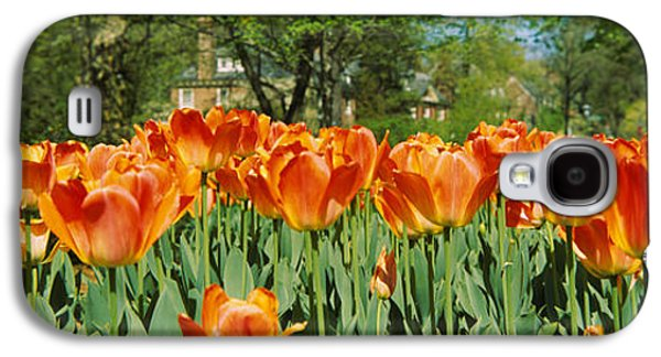 Garden Scene Galaxy S4 Cases - Tulip Flowers In A Garden, Sherwood Galaxy S4 Case by Panoramic Images