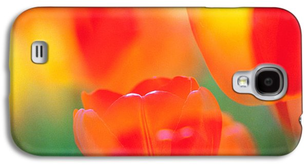 Designs In Nature Galaxy S4 Cases - Tulip Flowers Galaxy S4 Case by Panoramic Images