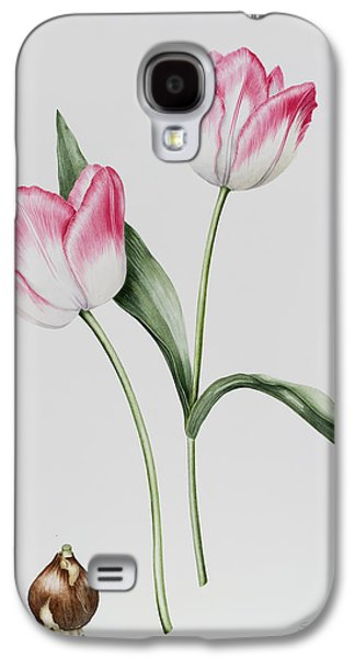 Spring Bulbs Paintings Galaxy S4 Cases - Tulip Meissner Porcellan with Bulb  Galaxy S4 Case by Sally Crosthwaite