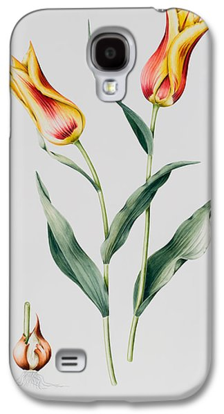 Bulb Galaxy S4 Cases - Tulip Mona Lisa Galaxy S4 Case by Sally Crosthwaite