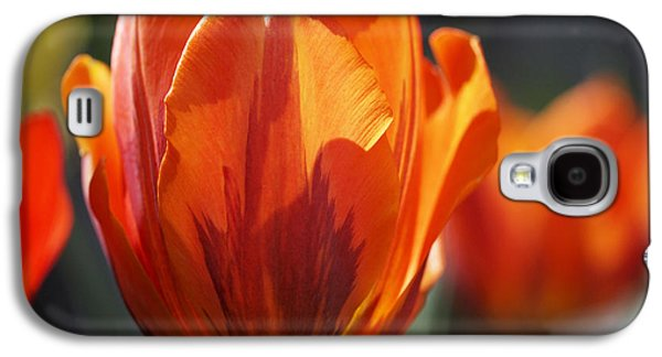 Botanical Galaxy S4 Cases - Tulip Prinses Irene Galaxy S4 Case by Rona Black
