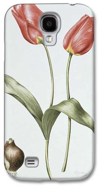 Spring Bulbs Paintings Galaxy S4 Cases - Tulip Red Darwin Galaxy S4 Case by Sally Crosthwaite