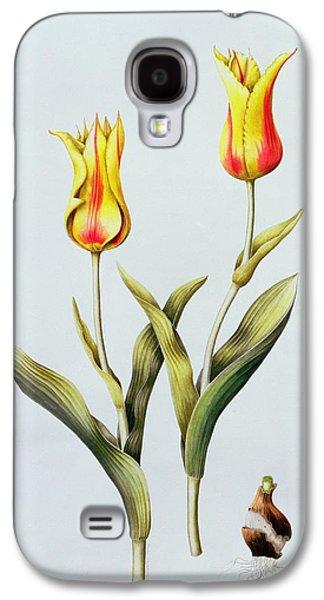 Spring Bulbs Paintings Galaxy S4 Cases - Tulipa Mona Lisa Galaxy S4 Case by Sally Crosthwaite
