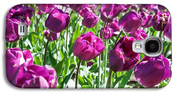 Garden Scene Galaxy S4 Cases - Tulips At Sherwood Gardens, Baltimore Galaxy S4 Case by Panoramic Images