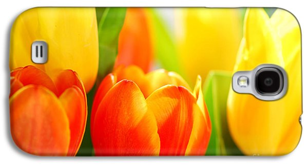 Light Galaxy S4 Cases - Tulips Galaxy S4 Case by Elena Elisseeva