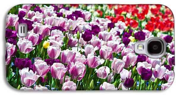 Red Photographs Galaxy S4 Cases - Tulips Field Galaxy S4 Case by Sebastian Musial