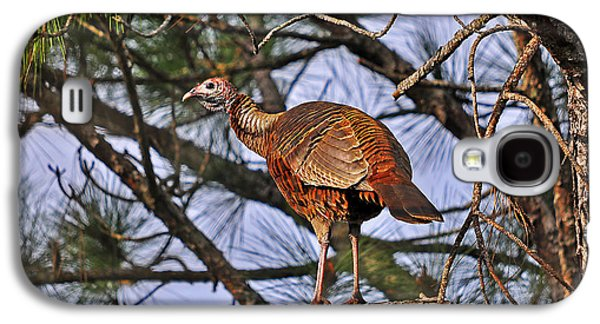 Wild Turkey Galaxy S4 Cases - Turkey in a Tree Galaxy S4 Case by Al Powell Photography USA