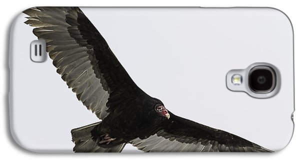 Young Turkey Galaxy S4 Cases - Turkey Vulture In Flight Galaxy S4 Case by Thomas Young